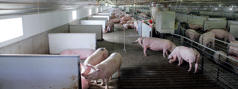 agricultura-alimentacion-Industrias-pureti-españa